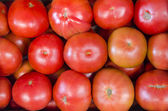 Tomatoes, — Stock Photo