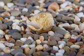 Pebbles on Ocean Shore and conch — Stock Photo