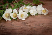 Flowers on wooden background — Stock Photo