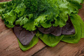 Lettuce, parsley, dill and spinach — Stock Photo