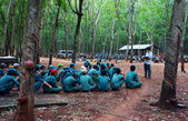Worker meeting at rubber plantation — Stockfoto