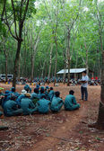 Worker meeting at rubber plantation — Stock Photo