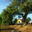 Stock Photo: House on stilts under ancient tree