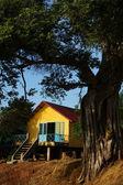 House on stilts under ancient tree — Stock Photo