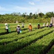 Stock Photo: Group of farmer working at farmland,