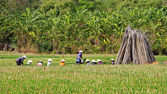 Group of farmer working at farmland, — Foto de Stock