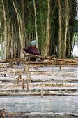 árvore de indingo de colheita de pessoas — Foto Stock