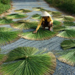 People dry rush (sedge)  in sector shape — Stock Photo