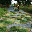 People dry rush (sedge)  in sector shape — Stok fotoğraf
