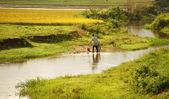 Farmer working at farmland — Stock Photo