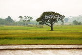 Viet Nam countryside — Stock Photo