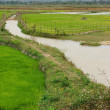 Color and curve with ricefield and ditch — Stock Photo