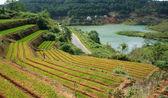 Green vegetable terrace garden and pine jungle — Stock Photo