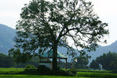 Children at temple under large tree on rice field — Photo