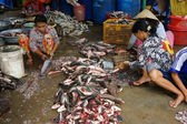 Group of people do fish preparation by scale and cut fish — 图库照片
