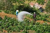 Vietnamese farmer working on flower garden — Foto de Stock