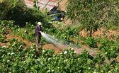 Vietnamese farmer working on flower garden in backwards way — Stock Photo
