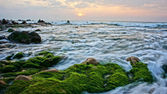 Beautiful landscape with green moss, stone, sunrise on sea — Stock Photo