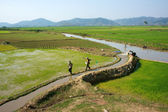 Farmer pump water to vast rice field — Stock Photo