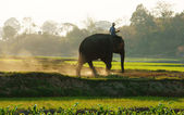 People ride elephant on path at countryside — Stock Photo