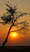 Sunset scene with sun, silhouette of branch of tree — Stock Photo