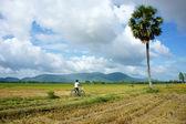 Vietnam landsbygden — Stockfoto