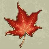 Maple leaf conceptual design — Stock Vector