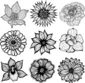 Set of 9 different hand drawn flowers, black and white isolated vector illustration — Stock Vector