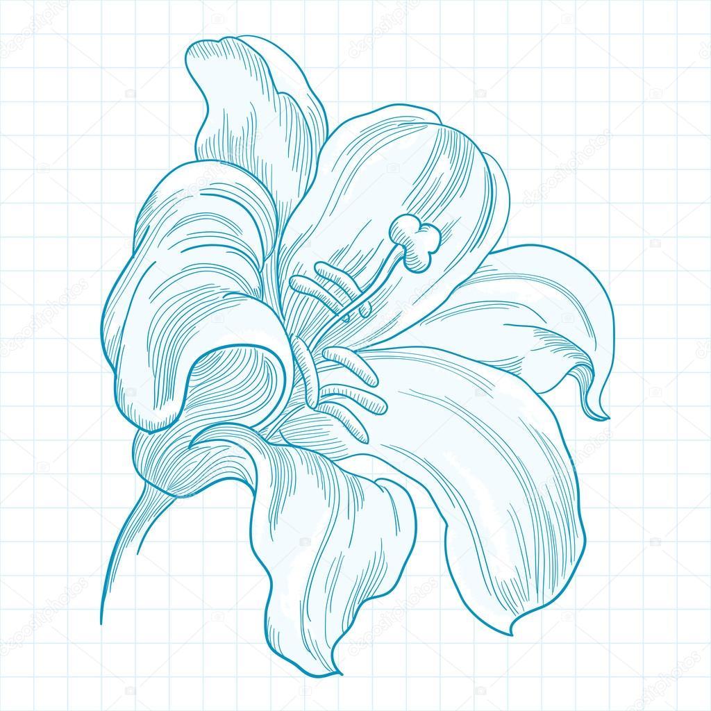 schreibheft zeichnung stilisierte lilie blume vektor. Black Bedroom Furniture Sets. Home Design Ideas