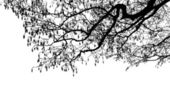Tree branches silhouette — Stock Vector