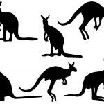 Постер, плакат: Kangaroo