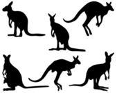 Kangaroo — ストックベクタ