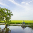 A tree and unidentified man with his bike — Stock Photo