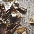 Stock Photo: Dried porcini