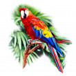 Scarlet Macaw — Photo #39829355
