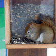 Stock Photo: Small squirel