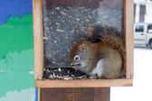 Small squirel — Stockfoto