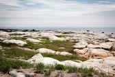 Stone beach — Stock Photo