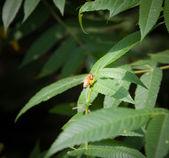 Дикая пчела — Стоковое фото