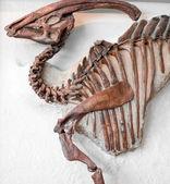 Dinosaur — Stockfoto