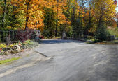 Road with autumn forest — Stock Photo