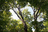 Treetops in park — Stock Photo