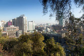 City through stems — Stockfoto