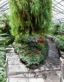 Greenhouse with plants — Stock Photo