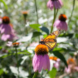 Butterfly on flower — Stock Photo #47644949