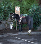 Horse near parking sign — Stock Photo