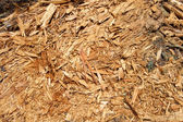 Wood shavings — Photo