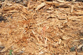 Wood shavings — Stock Photo