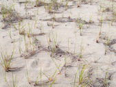 Grass in sand — Stock Photo