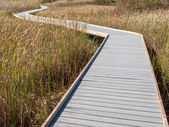 Boardwalk through marsh reeds — Stock Photo